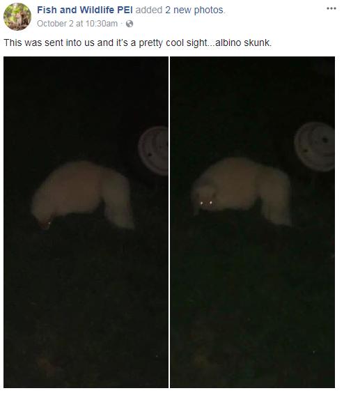 skunk feature